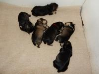 Upside Down at the top and swirling down from there we have Battenberg, Pound, Sponge, Angel and Marble. Age: 1 week