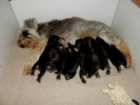 It is already getting crowded at the buffet (Marble, Angel, Sponge, Upside Down, Pound and Battenberg). Age: 1.5 weeks