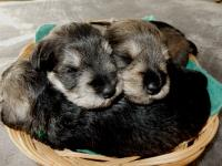 Sponge and Pound are using Upside Down as their pillow. Age: 3 weeks