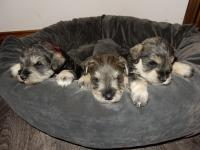 Sponge, Pound and Upside Down at 4 weeks old.