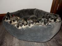 Sponge, Pound, Upside Down, Angel, Battenberg and Marble (3 boys, 3 girls)