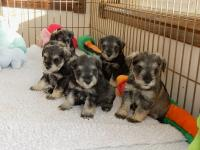 Each and every one of them adorable! Age: 5 weeks