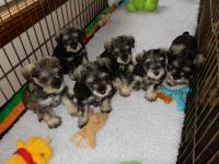 A delicious group!  Age: 6 weeks