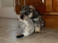 Confident on ceramic floor and grabbed a toy right away. Age: 7 weeks