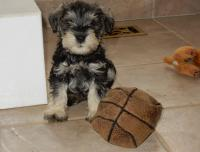 Anyone want to play basketball? Age: 7 weeks