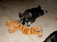 All the Cakes LOVE toys!  Lots of toys!!! Age: 7 weeks